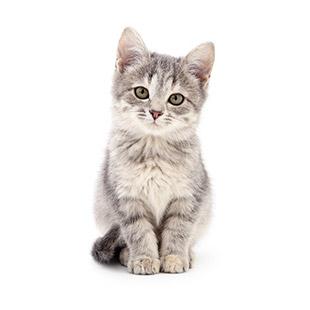 L'élevage des chatons