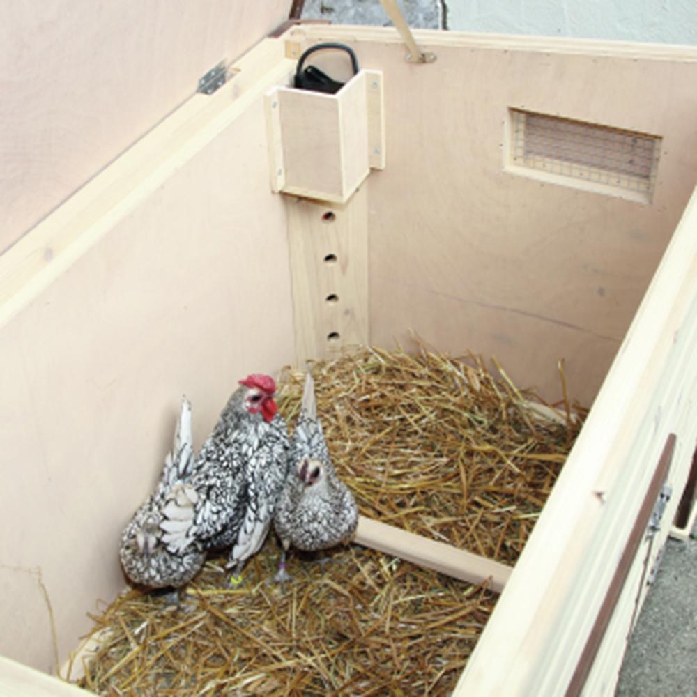 L 39 levage des poules vive l 39 levage poulailler for Vive l elevage poulailler