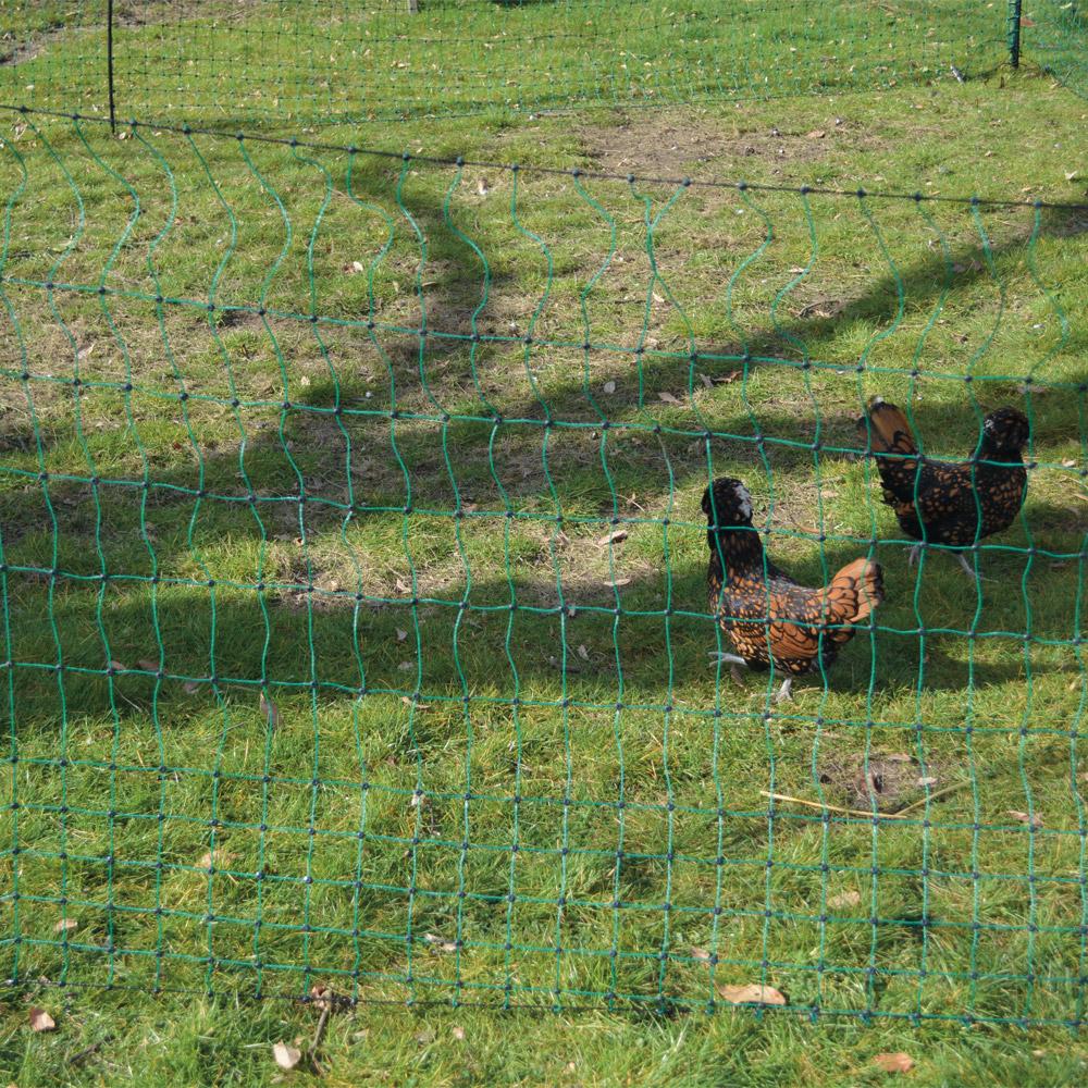 Basse cour vive l 39 levage filet volaille non lectrifi for Vive l elevage poulailler