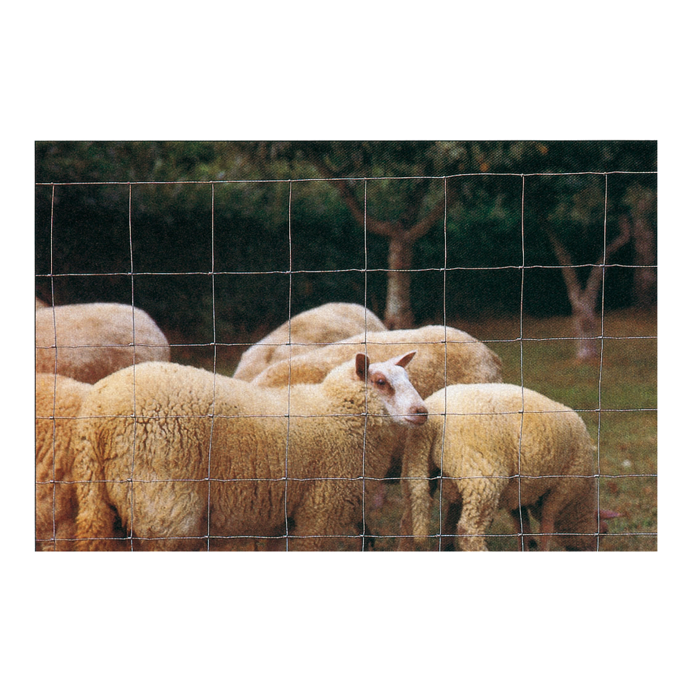 vive l 39 levage grillage moutons et ch vres animaux du pr. Black Bedroom Furniture Sets. Home Design Ideas